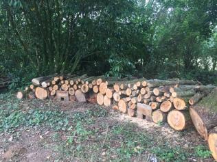 Les hérissons ont trouvé leur gîte grâce au bois de récupération.