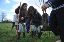 St Germier (79340)-2 mars 2016-Les enfants aidés des adultes participent au chantier de plantation de haies © Louise Baheux