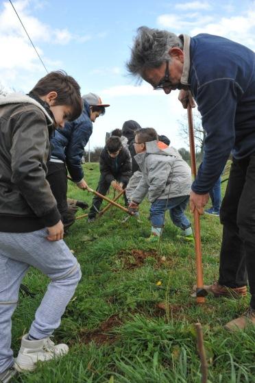 St Germier (79340)-2 mars 2016-Les enfants sont aidés par le maire, Jean-François Lhermitte, à planter les haies © Louise Baheux