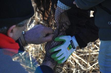 St Germier (79340)-2 mars 2016-Les petites mains et les plus grandes plantent les haies du village © Louise Baheux